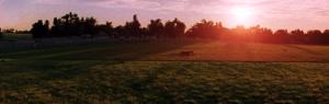 Dreamy meadow at dawn