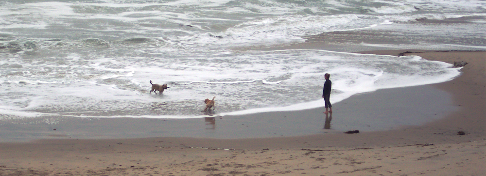 Seaside surf with man and dogs