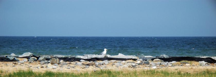 Chesapeake Bay beach and single gull