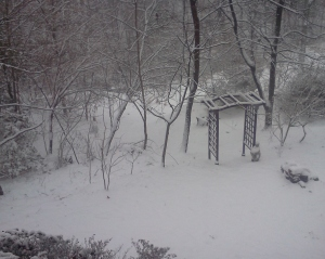 Janus Snowy Backyard