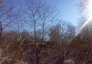 Across the River Ravine